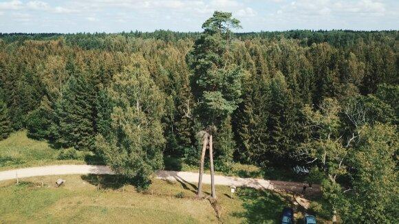 Šiurkiškių pušys sesės Ventos regioniniame parke