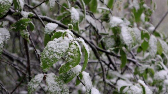 Į Lietuvą atkeliavo įspūdingos orų permainos: naktį siautęs vėjas vartė medžius – šalį nuklojo sniegas