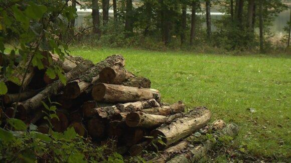 Gyventojai pasipiktino Seimo nario Raimundo Martinėlio veiksmais: iškirto medžius, mišką apsijuosė tvora (KK2 nuotr.)