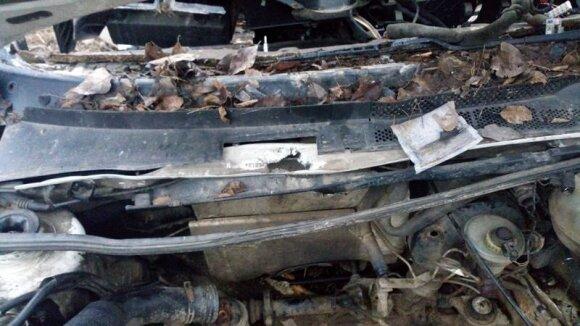 У леса обнаружен разрезанный VW Golf