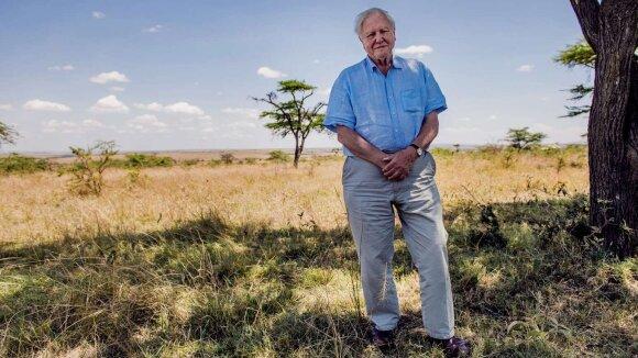 Davidas Attenborough Masai Mara rezervate Šiaurės vakarų Kenijoje dokumentinio filmo Gyvenimas mūsų planetoje filmavimo metu. Conor McDonnell nuotr.