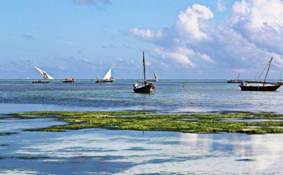 Zanzibaras – Afrikos technologijų pionierius be šaldytuvų