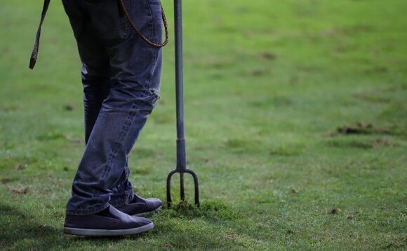 Samanos vejoje: kaip išnaikinti ir neleisti vėl užvaldyti