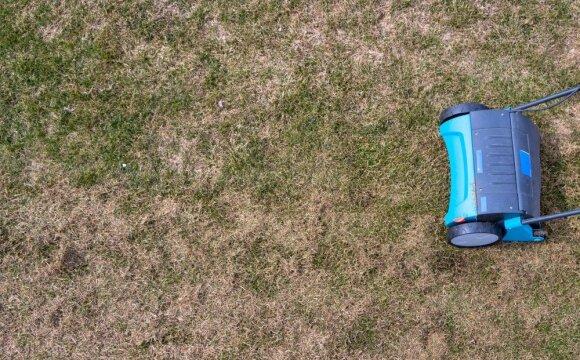 Pavasarinis vejos tvarkymas: kokie darbai laukia?