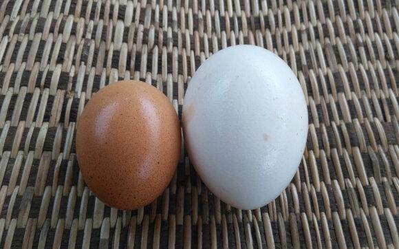 Auksinis kiaušinis – už vienetą turguje prašo 5 eurų
