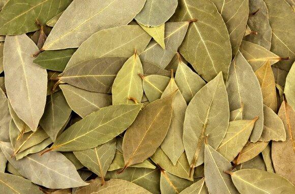 Laurų lapai