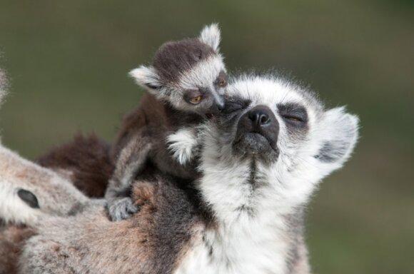 """<span class=""""delfi-highlight"""">Gražiausios salos:</span> Madagaskaras vilioja rečiausia augalija ir gyvūnija"""