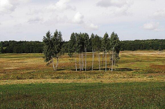 Pilkapynas ir II kapinynas iš rytų pusės // Juliaus Kanarsko nuotr., 2013 m.