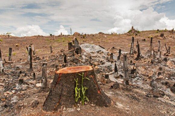 Iškirstas miškas tropikuose