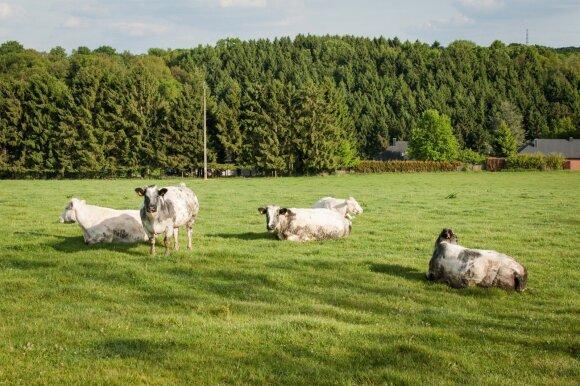 Verslininkas Juščius: norint užauginti ekologišką bulvę, nebereikia lauko arti arkliu