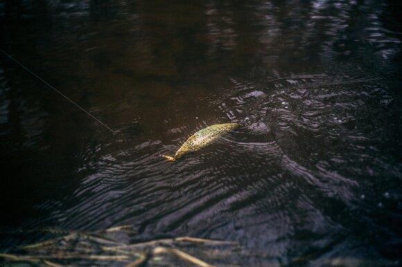 """""""trout.lt"""" upėtakių žvejybos sezono atidarymas"""