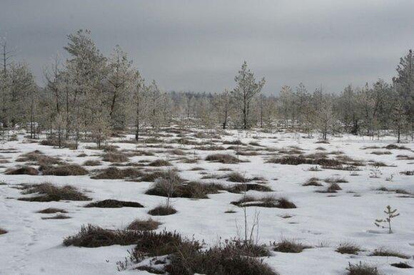 Čepkelių raistas žiemą