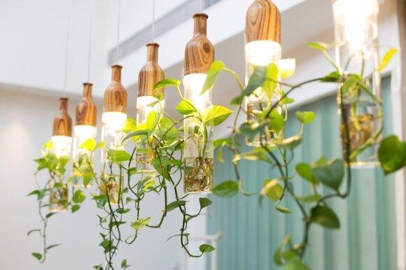 Kaip augalai gali pakeisti interjerą