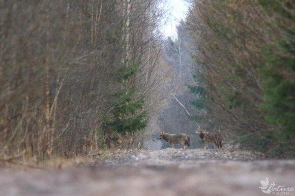 Aplinkosaugininkas apie nedrausmingus medžiotojus: šauna į tai, kas papuola