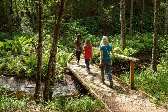 Vaikščiojimas miške