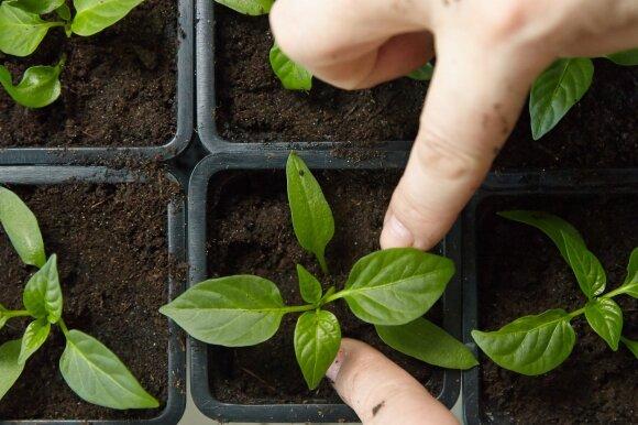 Vasaris: kokie darbai laukia darže bei sode?