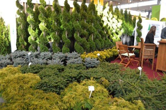 Parodoje buvo galima ne tik pamatyti, bet ir įsigyti įvairiausių augalų, kaip, pavyzdžiui, šių formuotų spygliuočių.