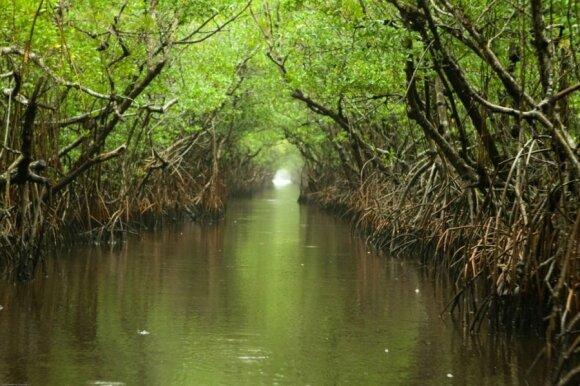 Evergleidso nacionalinis parkas (CC BY 2.0/ Chauncey Davis nuotr.)