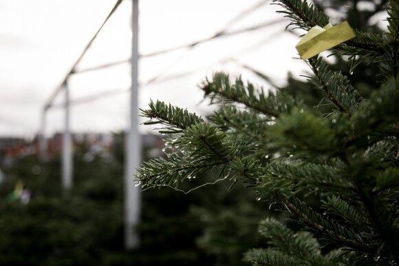 Kalėdoms ruoštis pradėjo jau spalio pradžioje: žmonės suskubo pirkti kalėdinių eglių