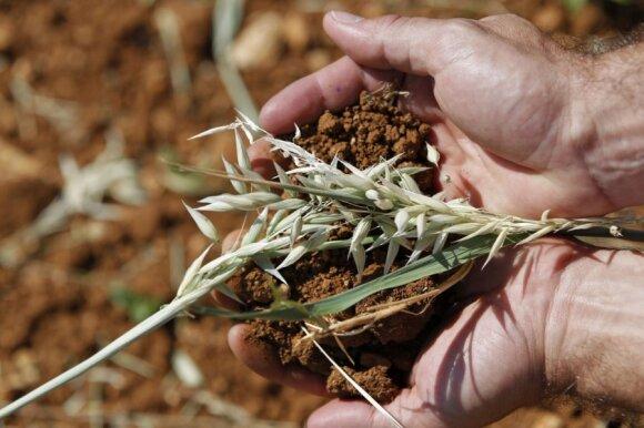 Su kokiais netikėtumais susidūrė ūkininkai, nusprendę įdirbti apleistą žemę