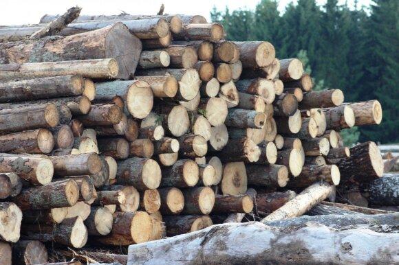Ką reikia žinoti investuojant į mišką