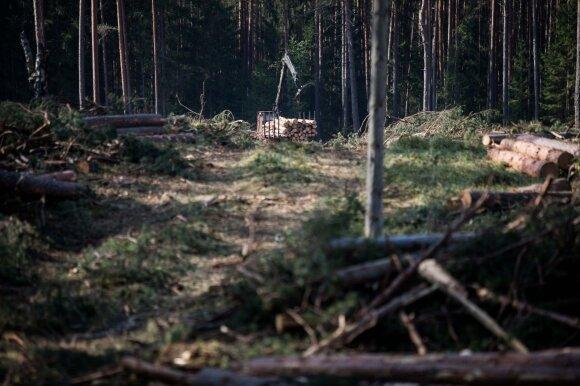 Nuomonė. Miško kirtimas – tarp mitų ir realybės
