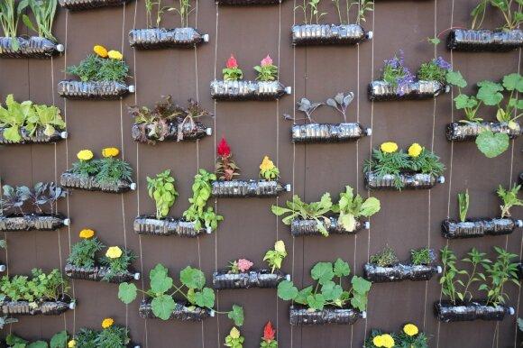 Nedidelis darželis balkone: įvairios vertikalios sodininkystės idėjos