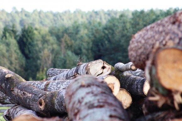 Vienas didžiausių Lietuvos miškų savininkų nerimauja: daugėja apribojimų ir pirkėjų iš užsienio