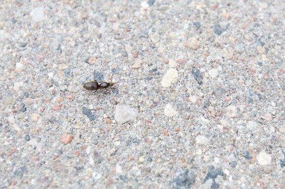 Sostinės gyventojams ramybės neduoda įkyrūs vabzdžiai: kažkoks siaubas