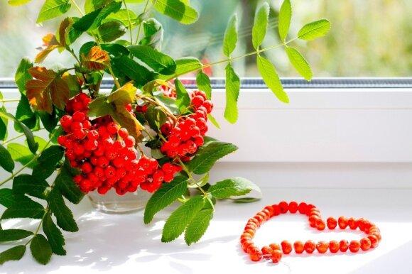 Tikra vitaminų bomba jums nieko nekainuos: svarbu laiku surinkti ir teisingai laikyti
