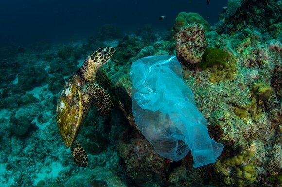 Plastikiniai maišeliai vandenynuose