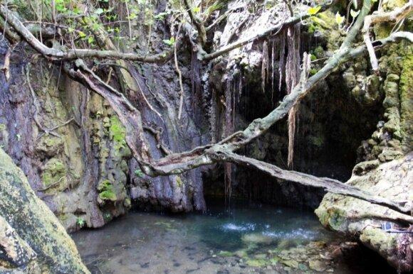 Saldūs stebuklai ir jaunystės vonios Afroditės saloje
