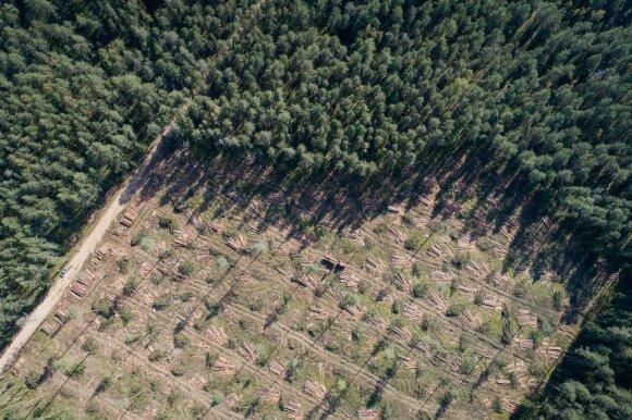 Miškininkai turi žinių manantiems, kad Lietuvoje mažėja miškų: statistika parodo tikrąją padėtį