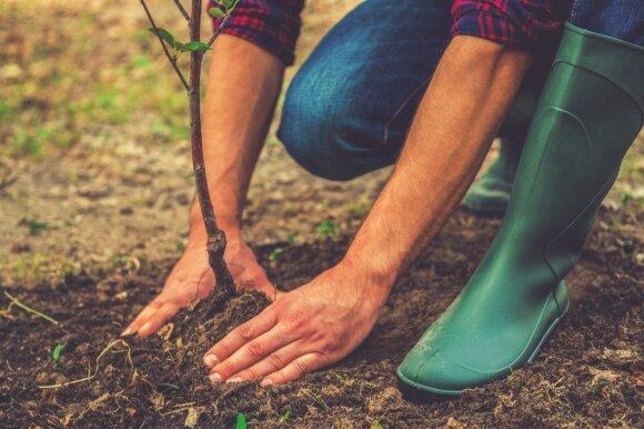 Kokie sodo darbai laukia šį mėnesį?