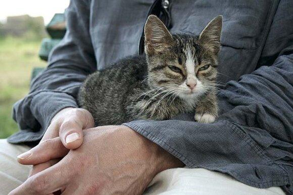 Benamius gyvūnus gruzinai saugo ir myli. Šis draugiškas katinėlis – Romos imperijos laikus menančios Gonio tvirtovės gyventojas