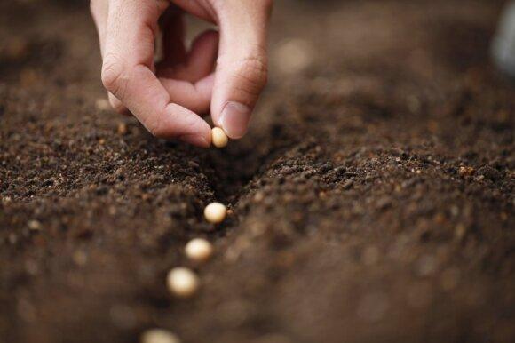 Į ką atkreipti dėmesį renkantis sėklas?