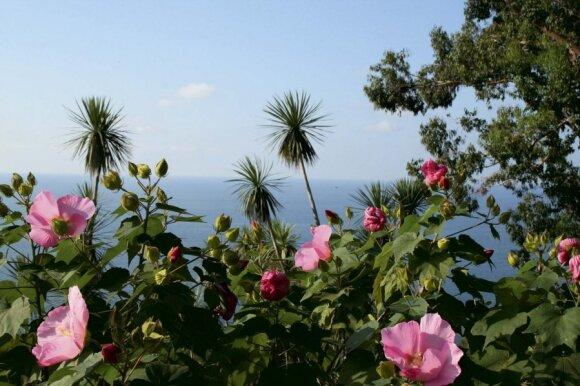 Batumio botanikos sode auga apie 2000 rūšių augalų