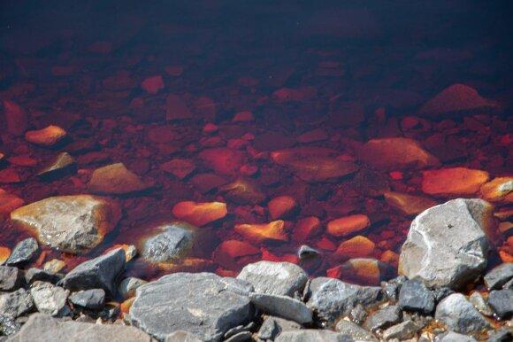 Розовая «вода» фенольного хвостохранилища между Торецком и Горловкой