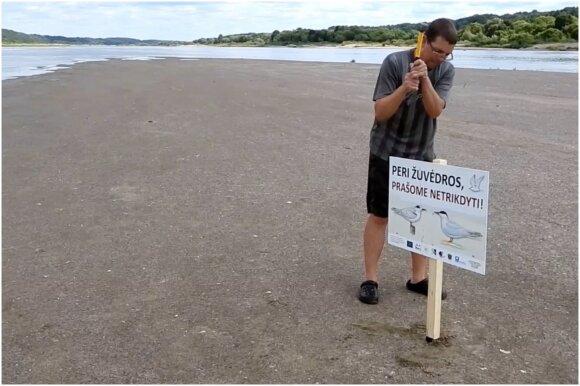 Upinės ir mažosios žuvėdros bei joms apsaugoti skirti darbai