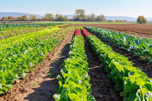 """Tvarumo link žengianti """"Bonduelle"""": atsakinga žemdirbystė, resursų taupymas ir pasiruošimas ateities iššūkiams"""