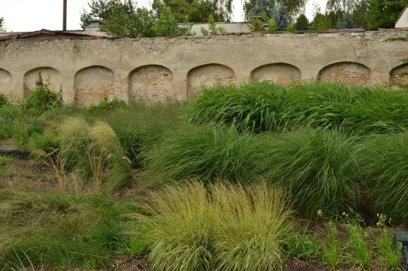 Vieną didžiausių dekoratyvinių siauralapių žolynų kolekciją galima pamatyti Vilniaus Botanikos sodo Vingio skyriuje.