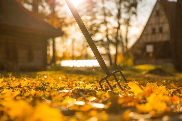 Ką rudenį sode turėtų nuveikti net didžiausi tinginiai