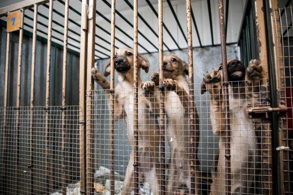 Gyvūnų prieglauda