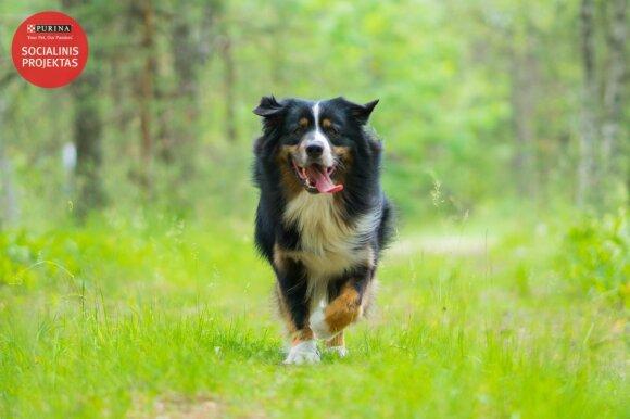 Lengvaatletis R. Urnežas: šunys man ir draugai, ir šeima, ir hobis