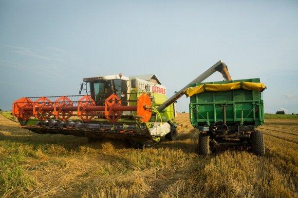 Grūdų rinka: ūkininkai riejasi su supirkėjais, eksportuotojai su perdirbėjais