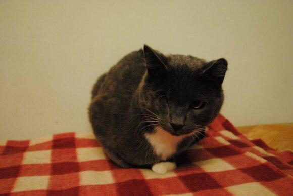 Katytė nebenori kentėti, padėkite!