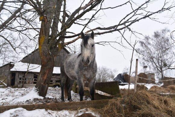 Olgos Choroškovos arklių prieglauda