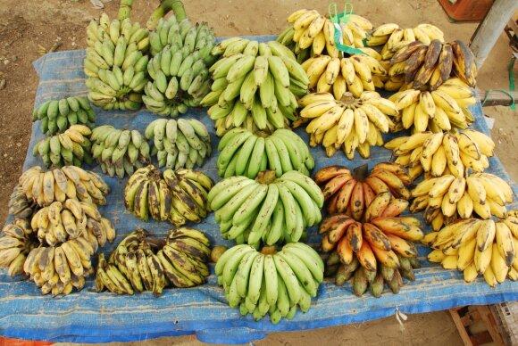 Bananų rūšys