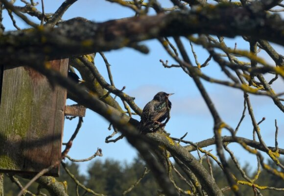 Apie pavasarį primena parskrendantys paukščiai