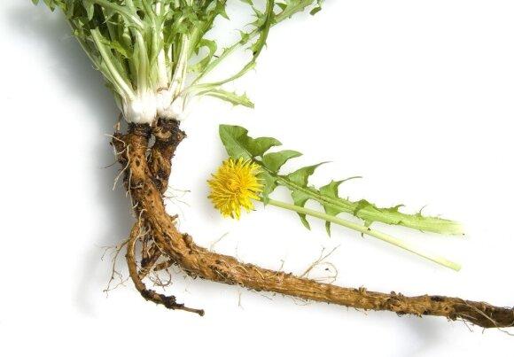 Vienos vertingiausių vaistažolių Lietuvoje: naudingosios savybės pranoksta visus lūkesčius